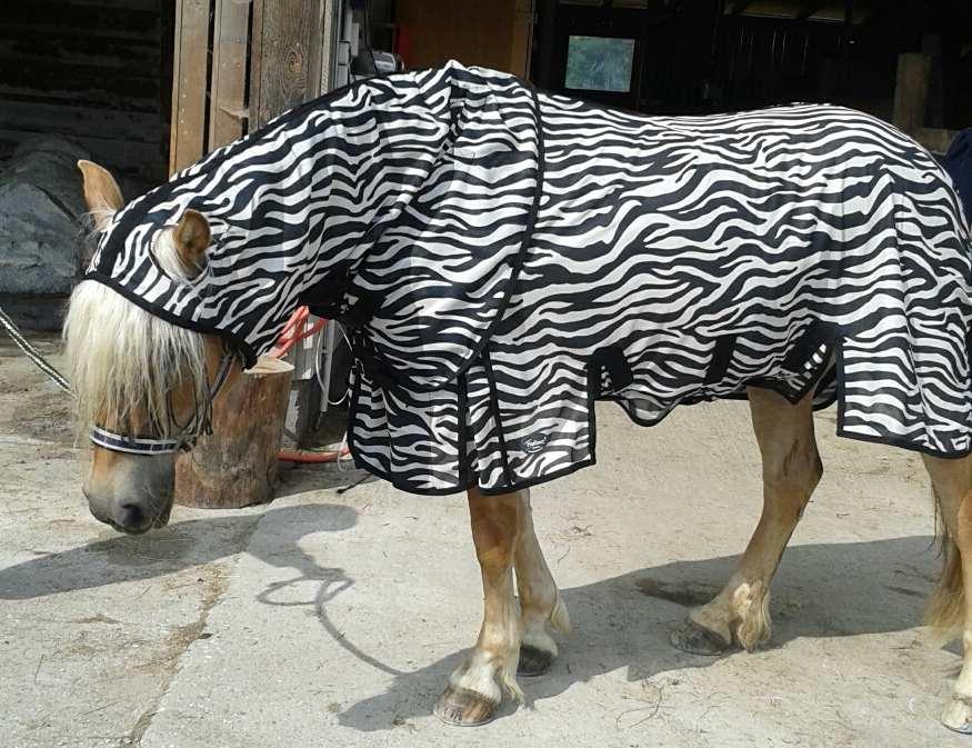 Zebra Fliegendecke 135 auf Haflinger