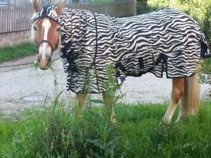 Fliegendecke Zebra gegen Bremsen